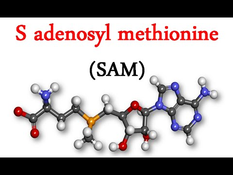 SAdenosylmethionine is a physiological substance synthesized by the body from an essential amino acid methionine and adenosine triphosphate Biochemically it is the most powerful methyl donor