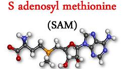 hqdefault - Adenosyl L Methionine Depression