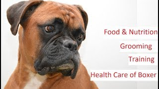 Boxer Dog 101  Feeding, Training, Grooming & Health Care of a Boxer Dog