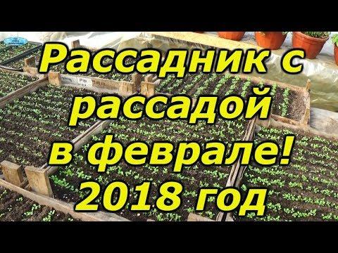 ОБЗОР НАШЕГО РАССАДНИКА НА 21 ФЕВРАЛЯ 2018 ГОДА!