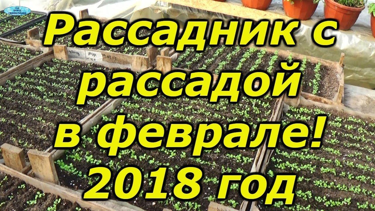 ОБЗОР НАШЕГО РАССАДНИКА НА ФЕВРАЛЬ- ЭТО ИНТЕРЕСНО!!!