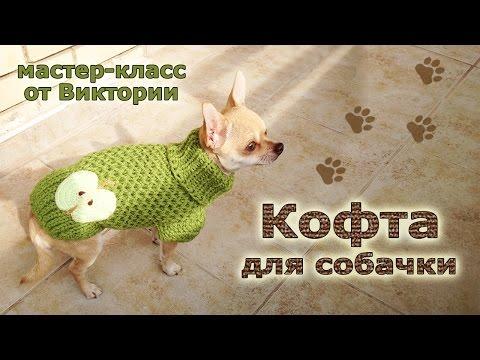 Вязаная одежда для собак своими руками для чихуахуа
