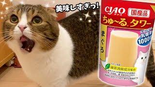 ちゅーるタワーが美味しすぎて喋る猫