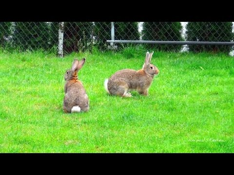 Эротические фото крольчих