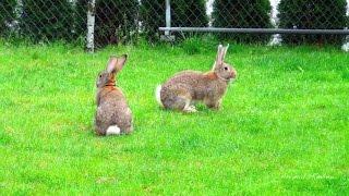 80 пород кроликов