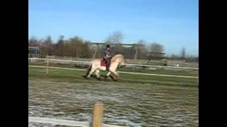 Min højt elskede pony, Braslevgaards Gandalf.