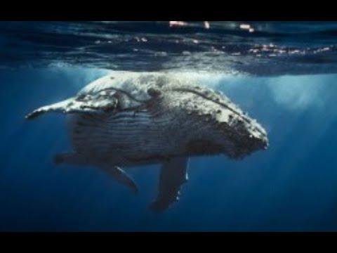 Iván Arenas muestra el increíble pene de una ballena azul - YouTube