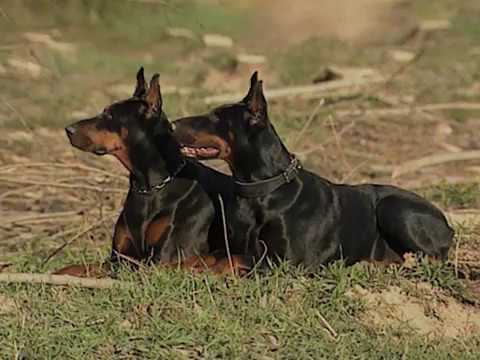 Dobermann documentary promo ora anche in streaming youtube