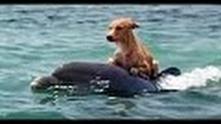 Gambar cover Real Life Heroes►Amazing! Animal Saves Another Animal►Animal Heroes Compilation 2017