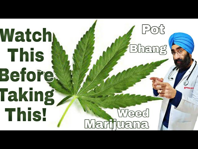 What happens when you take Bhang? Marijuana Weed Pot | Dr.Education