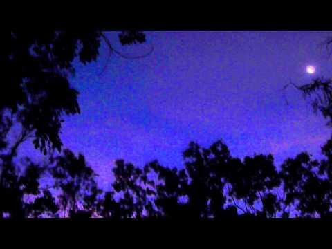 Strange Night Sounds in Australia, Kookaburras and other birds, very noisy