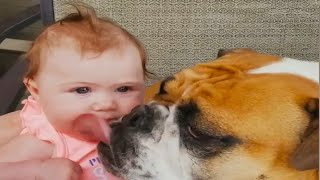Babies vs Dogs: Which are Most Cute and Funny? - Funniest Home Videos