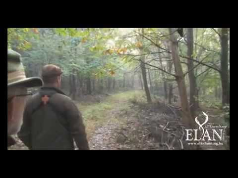 RED DEER STAG HUNT IN HUNGARY