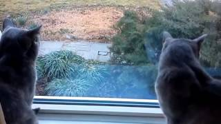 Прикол ! Общение двух котов .... Вы такого ещё не видели !