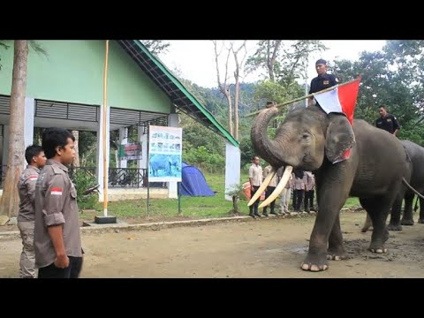 Elephants take the flag during Independence Day ceremony