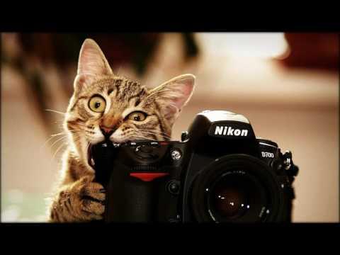 фото сделанные зеркальным фотоаппаратом