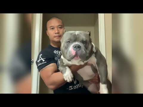 Awesome Animals  Stunning Bullies Pitbulls Dogs Funny Cute Puppies Dog Vine Compilation 2019