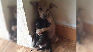 【感動実話】保護された後も抱き合う2匹の子犬に涙腺崩壊・・・