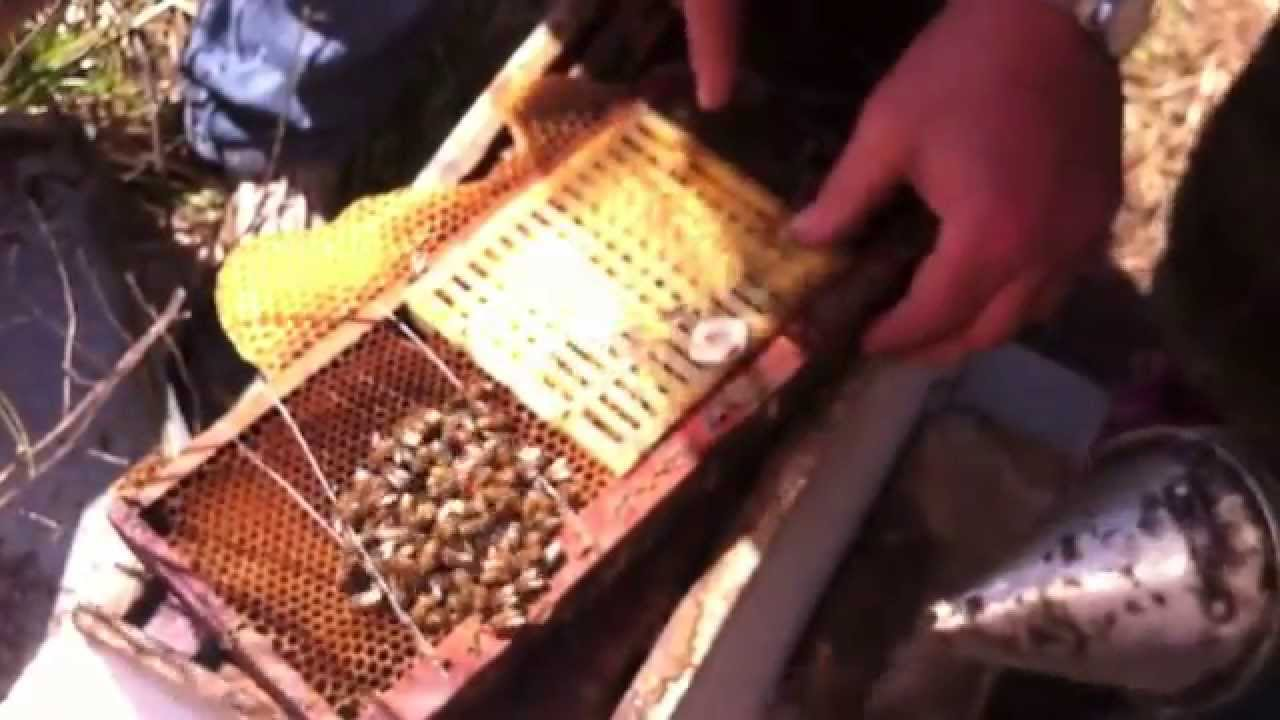 How to breed bees 23