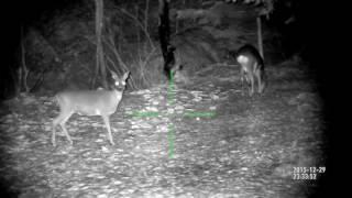 цифровой прицел ночной режим(Видео записано на умный цифровой прицел ATN X-Sight HD 3-12х день/ночь 24/7 Расстояние до цели до 50 метров. Официальны..., 2016-06-22T10:11:49.000Z)