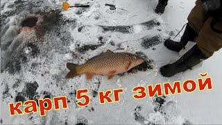 КАРП 5 кг ЗИМОЙ НЕ ЛЕЗЕТ в ЛУНКУ Трофейные карпы 5 кг