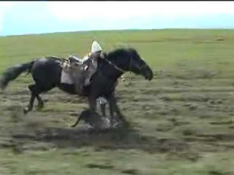 Kırgız Atları Youtube