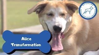 Alice Transformation