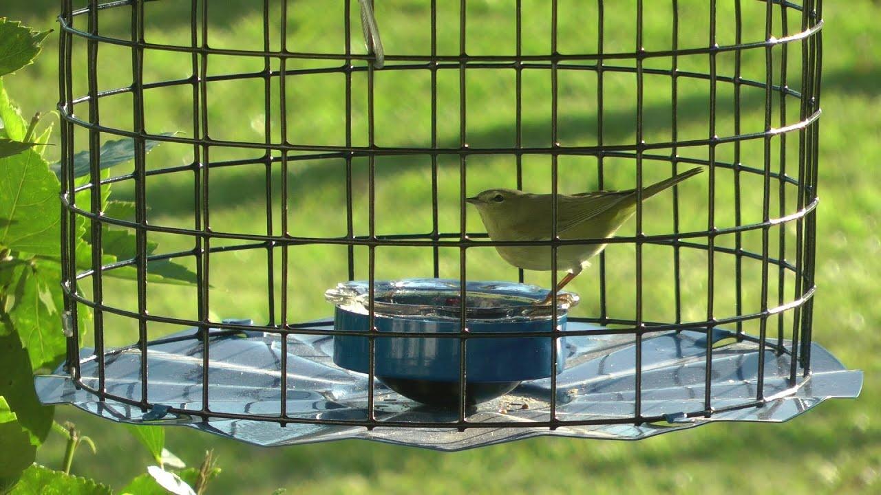 mealworm bird feeders blue maximizer feeder duncraft bluebird com zoom