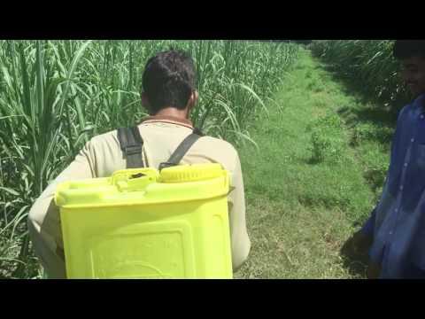 Herbicide in sugarcane