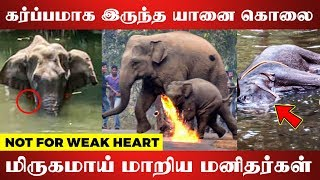 SHOCKING: Pregnant Elephant Dies After Eating Pineapple Stuffed With Crackers | Emotional Video
