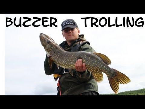 Gäddfiske med buzzer och trolling i Hälsingland