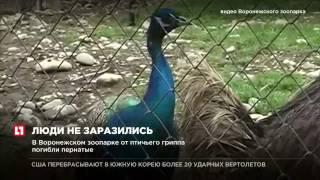 Работники Воронежского зоопарка не заразились вирусом птичьего гриппа