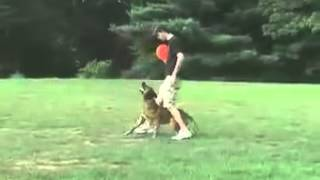 Maryland Dog Training By Canine Obedience Unlimited