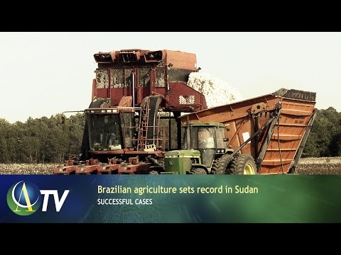 Brazilian agriculture sets record in Sudan | Successful Cases