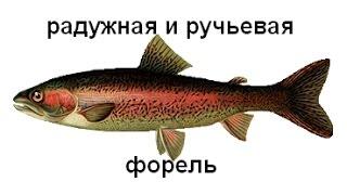 Русская Рыбалка 3.99 угорь для кармы