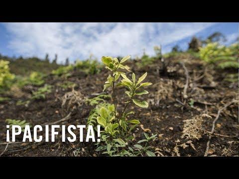 PACIFISTA presenta: El Naya: la ruta oculta de la cocaína
