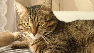 Котик  заболел  Мочекаменная болезнь?