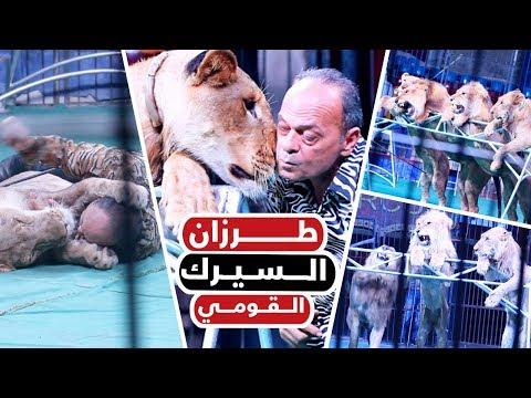 طرزان السيرك القومى.. العشق المرعب بين مدحت كوته والأسود  - 19:55-2019 / 9 / 9