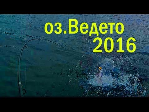 оз. Ведето, Полоцкий район 2016, рыбалка в Беларуси - YouTube