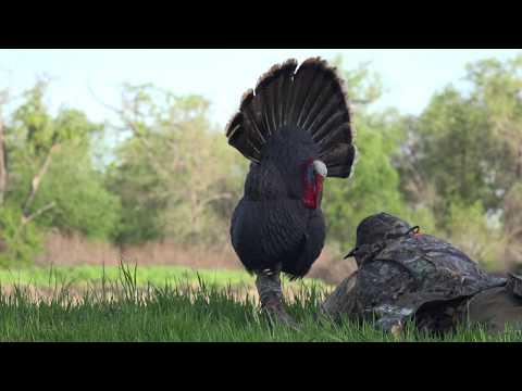 Spurrin' E2 - Central California Turkey Hunt