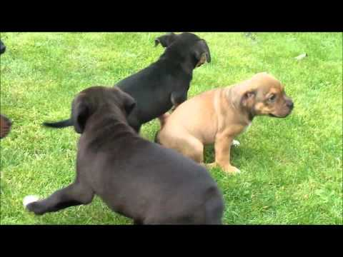Dogs Trust Glasgow: Rugby Pups!