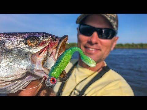 Lambasting speckled trout next to huge alligator