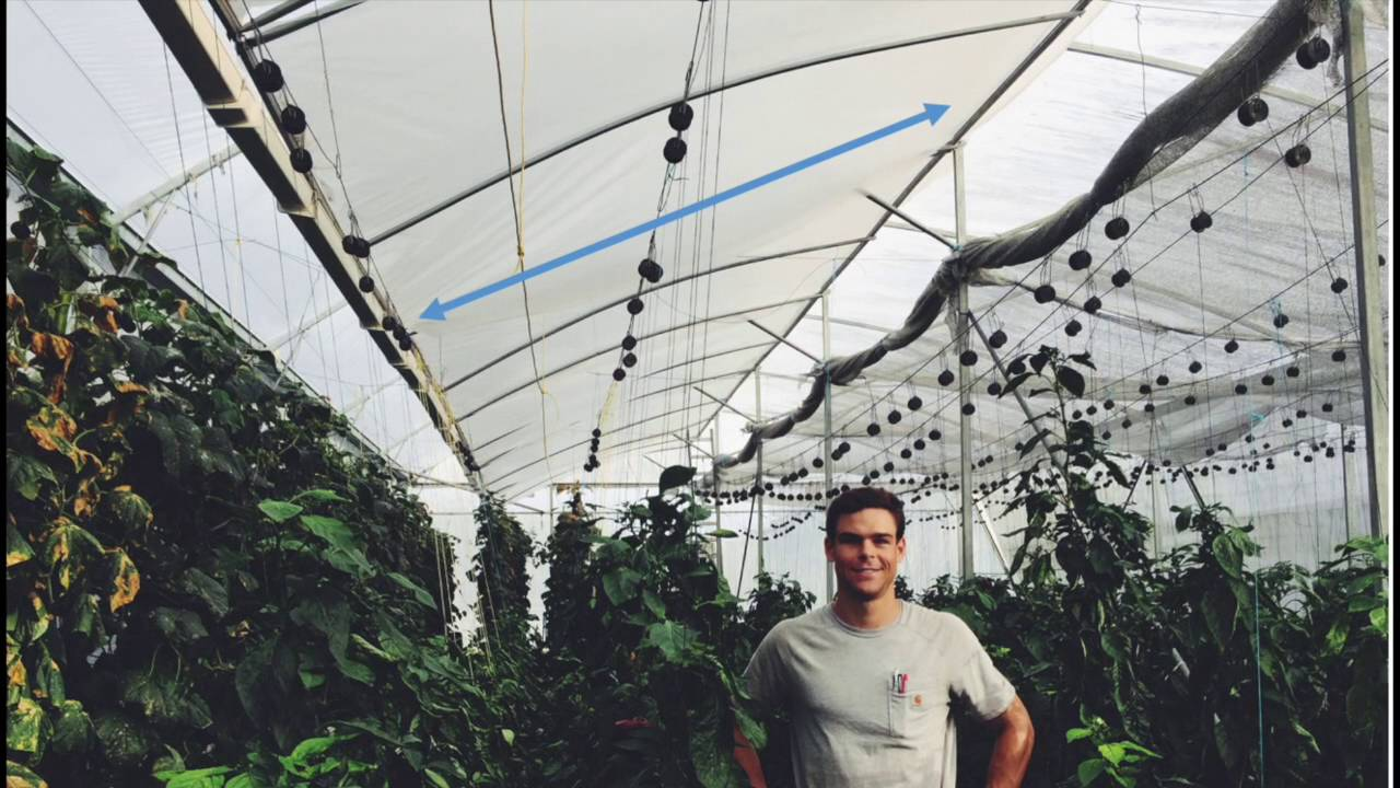 Tropical And Hot Climate Greenhouse Design Natural Ventilation