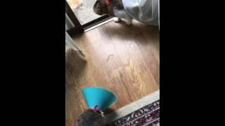 外の猫と喧嘩してたはずなのにいつの間にか内輪もめになってた(笑)