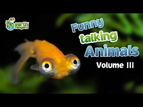 Funny Talking Animals: Episode Three