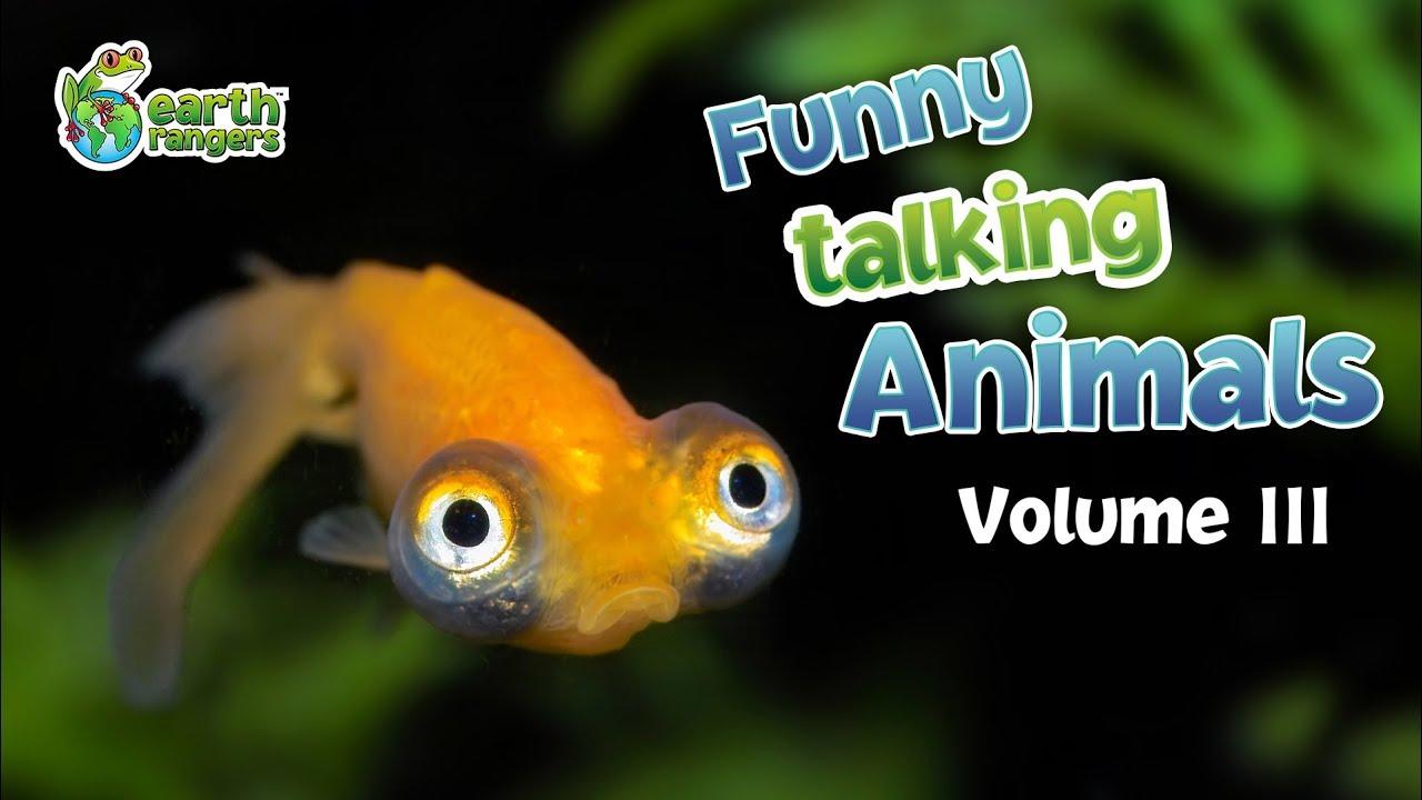 Funny Talking Animals: Episode 3