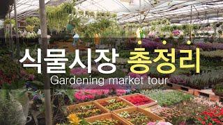 (EN)[베란다정원:식물시장 총정리] 양재꽃시장, 과천…