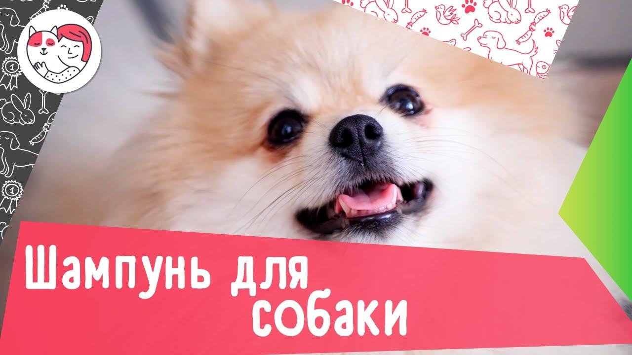 Как правильно выбрать шампунь для собаки: 5 советов