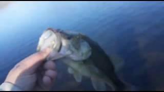 Американская рыбалка Ловля Басса на озере Отпускаем рыбу