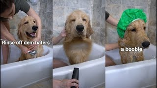 bathing a dog